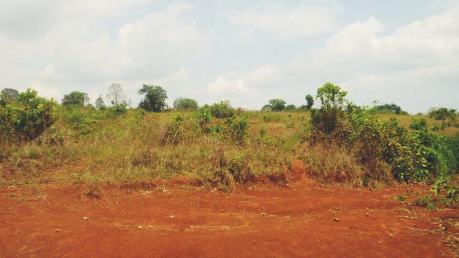 Tanzania Diary - Part 2/3